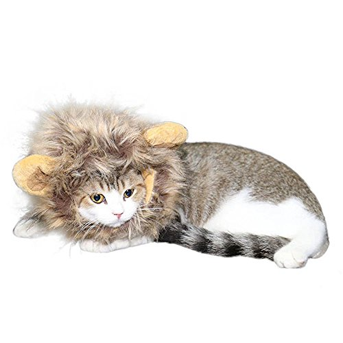 Lion  (Man Cat Costume)
