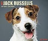 Just Jack Russells 2017 Box Calendar (Dog Breed Calendars)