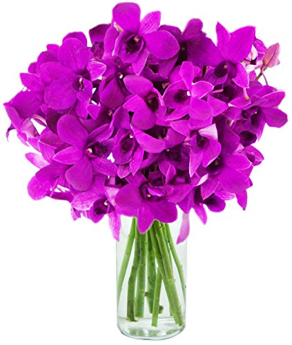 KaBloom The Ultimate Purple Orchid Bouquet: 20 Exotic Purple Dendrobium Orchids from Thailand with Vase by KaBloom