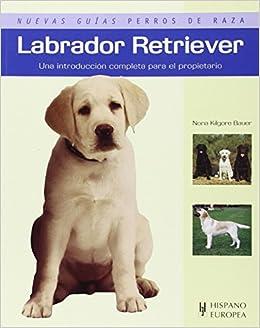 Perros RazaAmazon esNona Guías Labrador Retrievernuevas De fbgyvY76