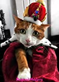 Crown Hat for cats an dogs and Wild Side Collar