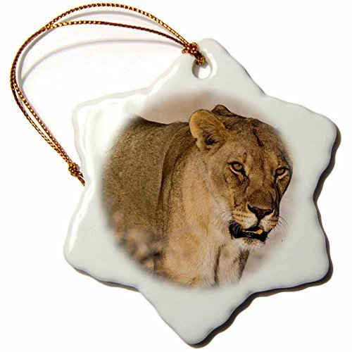 Roni Chastain Photography - Female Lion - 3 inch Snowflake Porcelain Ornament (244734_1)
