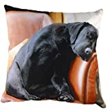 After the Walk (Sleeping Labrador) Cushion 43cm DPA064