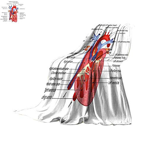 Educational Lightweight Blanket Medical Structure of The Hearts Human Body Anatomy Organ Veins Cardiology Velvet Plush Throw 60