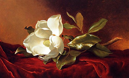 (Roya Art-Magnolia Grandiflora by Martin Johnson Heade Hand Painted Classical Reproduction Painting On Canvas White Flower Painting For Home/Office Wall Decoration, Size 36