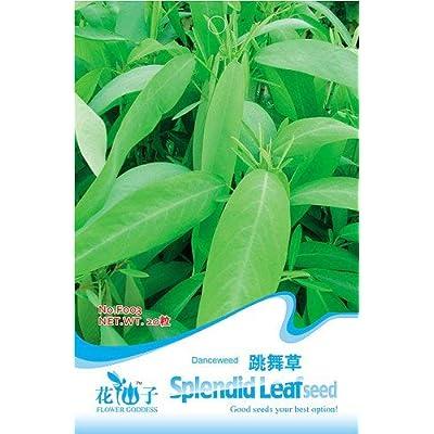 Business sasha Each Pack 20 Seeds Beautiful Lovely Splendid Leaf Codariocalyx Motorius (1) : Garden & Outdoor