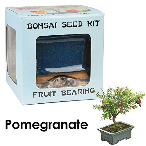 Ceramic Mix Fruit - Eve's Pomegranate Bonsai Seed Kit, Fruit-Bearing, Complete Kit to Grow Pomegranate Bonsai from Seed