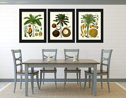 Palm Tree Art Print Set of 3 Antique Beautiful Green Plants Coconut Tropical Seeds Chart Island Nature Home Room Wall Decor Unframed KOH