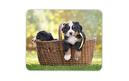 Amazoncom Bernese Mountain Dog Puppies Mouse Mat Pad