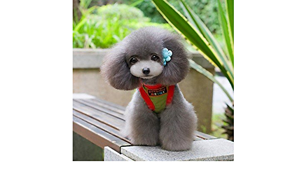 Tinte rojo boda Mixed material camiseta para perros: Amazon ...