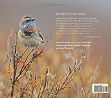 Living Bird: 100 Years of Listening to Nature