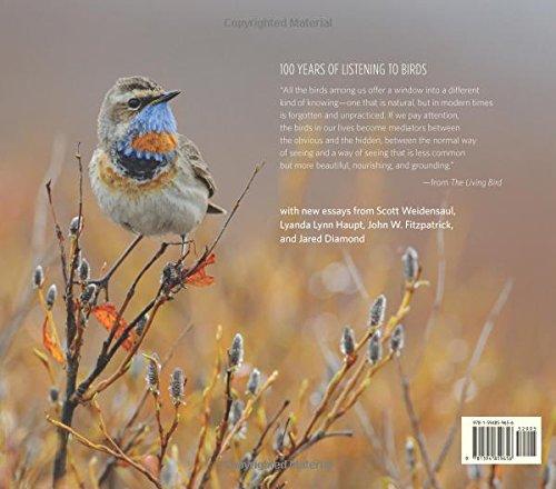 the birds essays