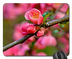 Spring branch Mouse Pad, Mousepad
