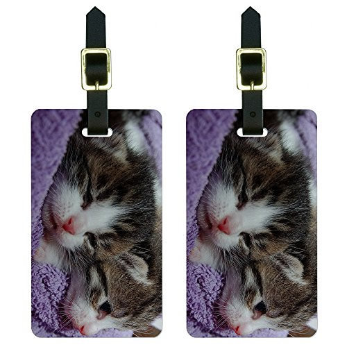 Kittens Kitty Luggage Suitcase Carry