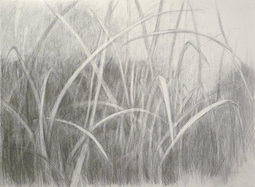Grasslands by