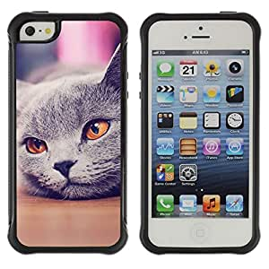 ZETECH CASES / Apple Iphone 5 / 5S / RUSSIAN BLUE BRITISH SHORTHAIR CAT / Ruso azul británico shorthair gato / Robusto Caso Carcaso Billetera Shell Armor Funda Case Cover Slim Armor