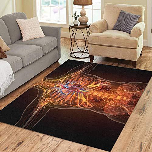 (Pinbeam Area Rug Blue Anatomy of Human Organs in X Ray Home Decor Floor Rug 3' x 5' Carpet)