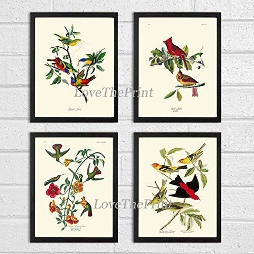Bird Print Set of 4 Art Beautiful James Audubon Painted Finch Red Cardinal Hummingbird Tanager Home Wall Room Decor ()