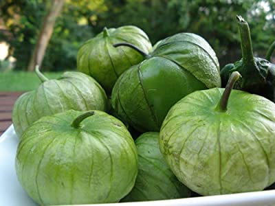 "100+ Tomatillo Verde Seeds- Heirloom Variety- ""Green Tomato"", ""Ground Cherry"""