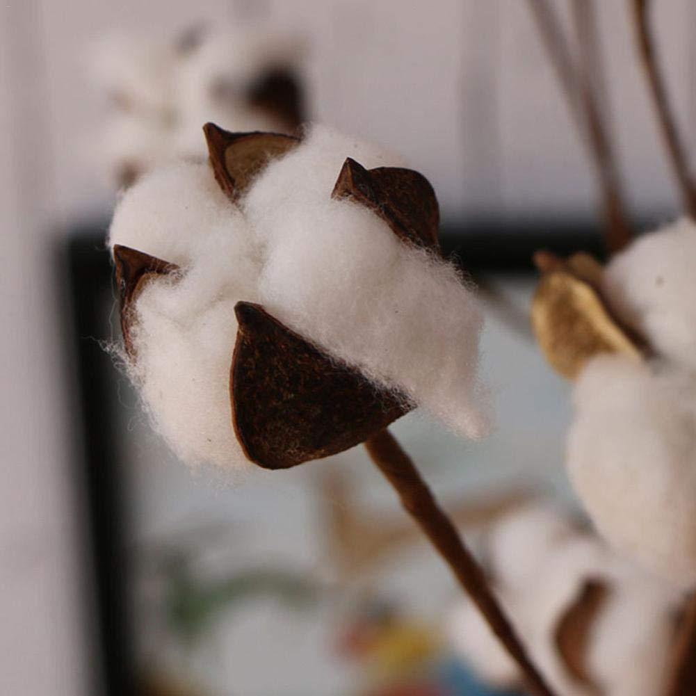Ristorante Fiori secchi Naturali con Veri boccioli di Cotone,8 Fiori Secchi in Cotone Naturale per Soggiorno,Camera da Letto Auto