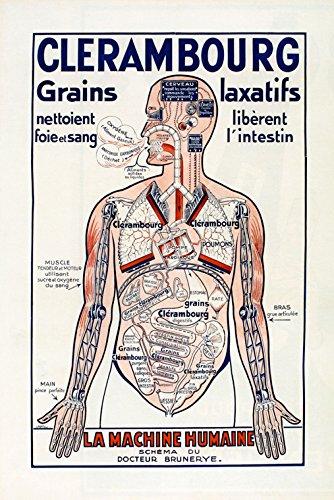 Amazon.com: Medical Incredible Human Machine Body France French ...