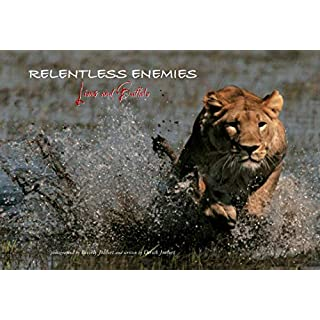 Relentless Enemies: Lions and Buffalo