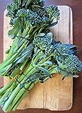 Sweet Baby Broccoli 50 Seeds - Sweeter than Broccoli!
