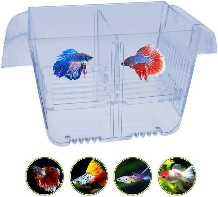 ben-gi Peces de Acuario Criador Box Alto Claro Doble Eclosi/ón Incubadora Incubadora aislador Aislamiento Breeding Box