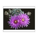 10x8 Print of Flowering hedgehog cactus. Echinocereus pulchellus amoenus (13955555)