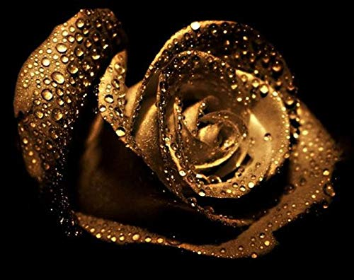 Wowdecor 5D Crystal Diamond Painting with Diamonds Kits, Noble Gold Rose Flower, Full Drill DIY Diamond Dotz Embroidery Crafts Graphy Art