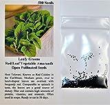Davids Garden Seeds Leafy Greens Red Leaf Vegetable Amaranth D516 (Green) 500 Open Pollinated Seeds