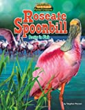 Roseate Spoonbill, Stephen Person, 1617725706