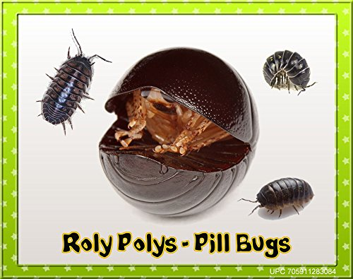 Insectsales Com 30 Live Roly Polys Educational Amp Fun