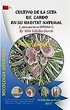 Cultivo de la Seta de Cardo en su habitat natural [Fvg]: PROYECTO: ¡Para que no se EXTINGA! Asociación del hongo Pleurotus Eryngii con la planta Eryngium Campestre. (Reedicción 2017) (Spanish Edition)