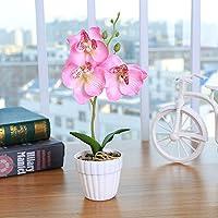 YJYdadaS - Planta de orquídea con Tres Flores: Amazon.es: Hogar