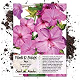 Seed Needs, Pink Four O' Clock (Mirabilis jalapa) 60 Seeds
