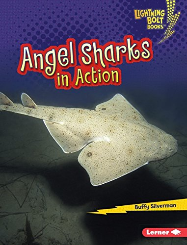 shark bolt - 6