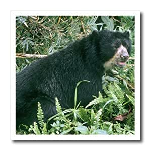 ht_85894_2 Danita Delimont - Bears - Spectacled Bear, La Planada Nature Reserve Colombia - SA05 KSC0016 - Kevin Schafer - Iron on Heat Transfers - 6x6 Iron on Heat Transfer for White Material
