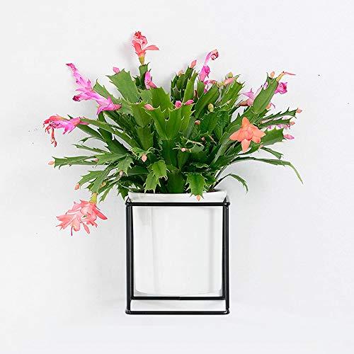 VanEnjoy Modern White Ceramic Desktop Wall Planters Vase and Copper, Succulent Pot Air Plants Mini Cactus Artificial Flowers Hanging Geometric Wall Decor (Square Black Metal)