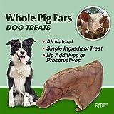 GigaBite Whole Pig Ears for Dogs - All Natural Pork