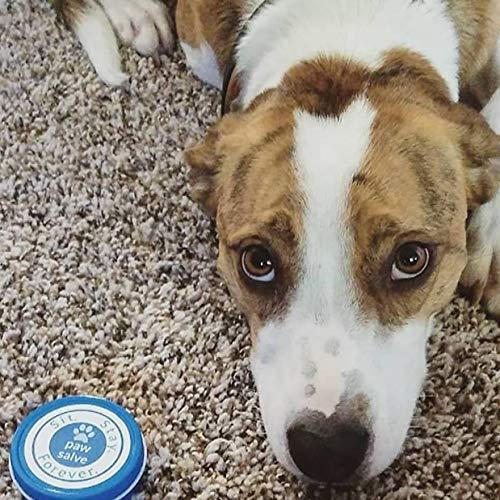 Amazon.com: Paw Salve orgánicos para perros, Healing Bálsamo ...