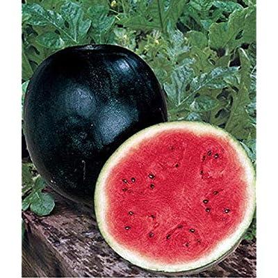 Watermelon Seeds Ukraine Heirloom Organic Berries Fruit Seeds Sugar Early : Garden & Outdoor