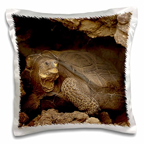 3dRose pc_86420_1 Giant Tortoise, Wolf Volcano, Galapagos Islands-SA07 POX2170-Pete Oxford-Pillow Case, 16 by 16