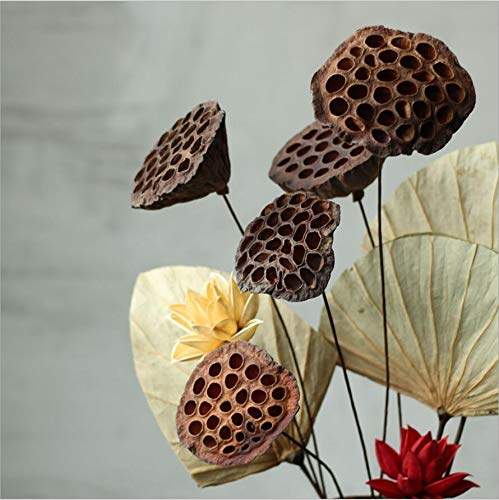 NWFashion-10PCSPackage-Mini-Natural-Dried-Brwon-Lotus-Pods-with-Stems-6-8CM