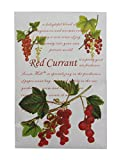 Scents Hill Air Freshener Scented Sachet, Lot of 4 (Red Currant)