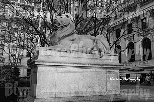 New York Public Library Lion, 42nd Street, Architectural Photography, Black & White, New York City Art, NY Print, Manhattan, Wall Art, Sizes Available from 5x7 to 20x30. ()