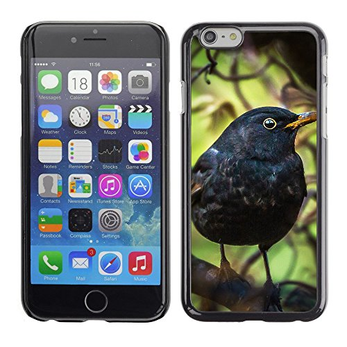 "Premio Sottile Slim Cassa Custodia Case Cover Shell // F00003373 oiseau noir // Apple iPhone 6 6S 6G PLUS 5.5"""