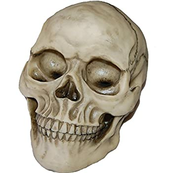 iseymi imitation 11 human skulls halloween props home decorations medical teaching resin bar accessories7564inch - Halloween Skulls