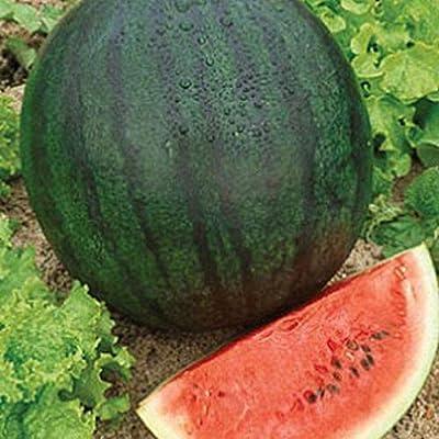 Sugar Baby Watermelon - The Original Ice-Box Watermelon! Delicious!!!!(25 - Seeds) : Garden & Outdoor