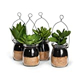 Abbott Collection Home 27-MOJAVE/05 Set of 4 Green Succulents in Bottle with Wire
